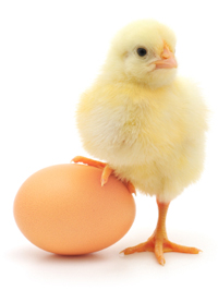 chickandegg